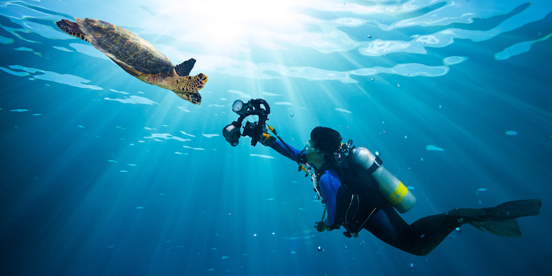 plongee tortue reserve cousteau